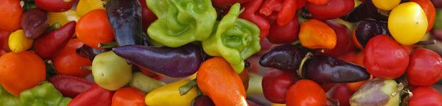 Kulinarische Spezialitäten von Mallorca - Piementos