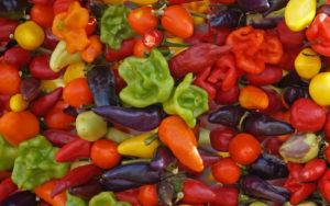 Kulinarische Spezialitäten von Mallorca - Piementos auf dem Markt von Santanyi