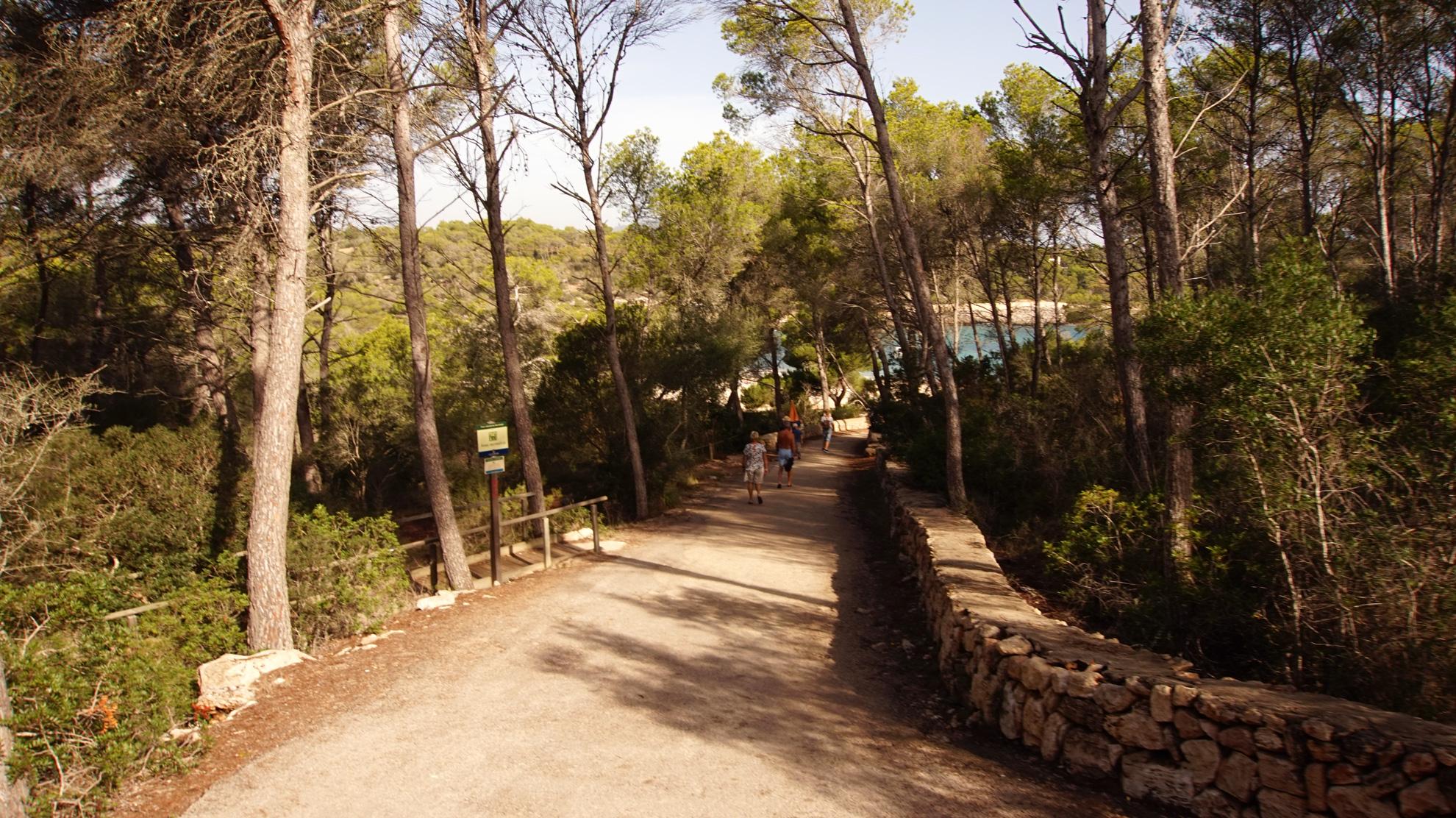Der Pfad zur Cala S'Aramador führt durch den Kieferwald.