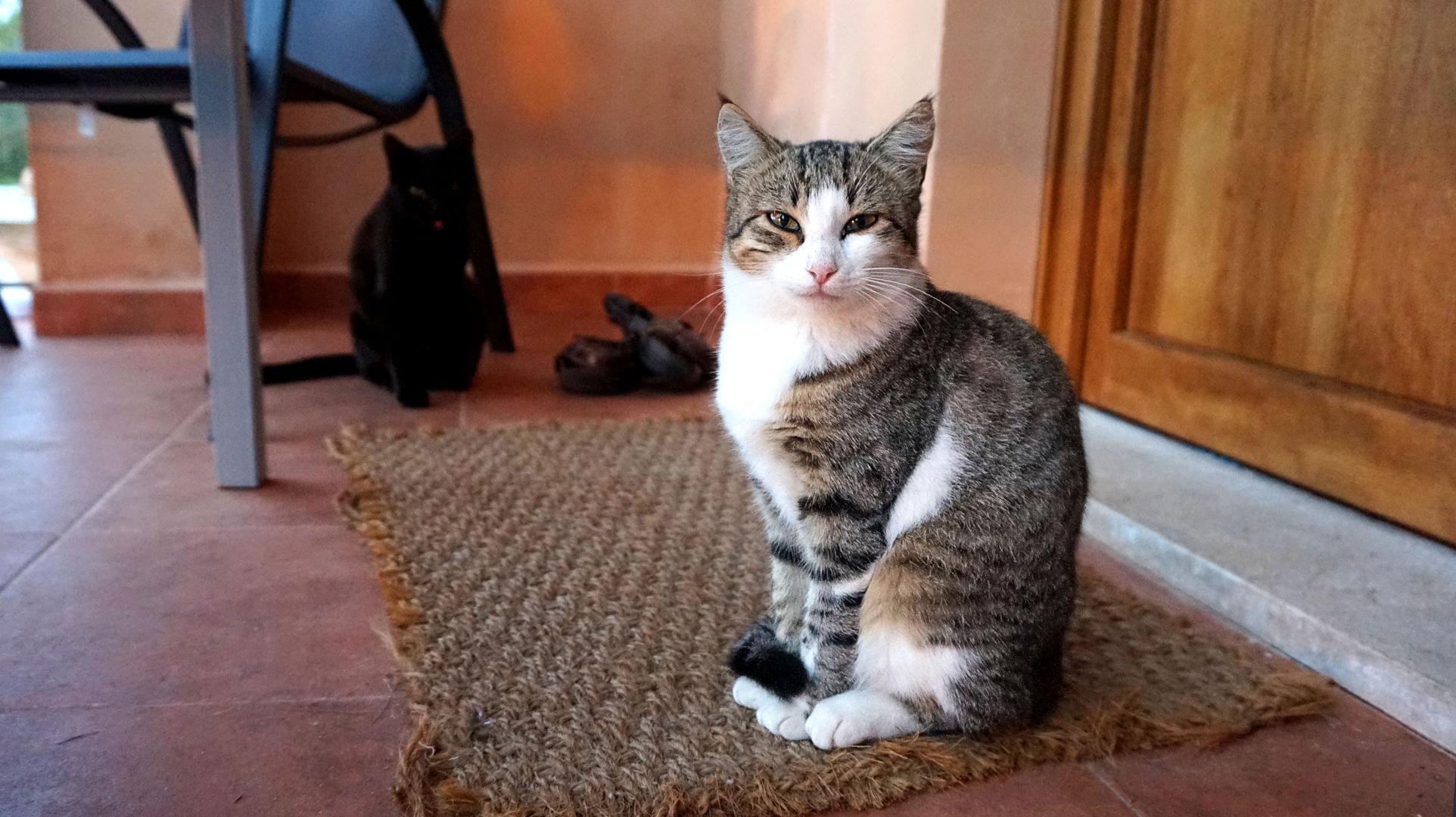 Wilde Katze am Ferienhaus